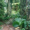 sokaの庭①