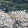 名残の桜~広島