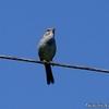 散歩道の身近な野鳥たち