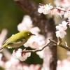 【大阪】万博記念公園で『梅まつり』開催!茶室の限定公開もあります