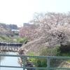 入間市 『 霞川沿いの桜並木と大黒天 』