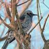 小鳥の中で強いヒヨドリは、可愛いところもある。