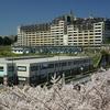 本郷台の桜 2011年版