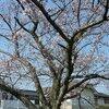 公園の桜 他