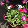 花の数が減ってきた😅