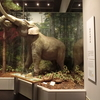 ■「総合展示 第1展示室「先史・古代」リニューアル」国立歴史民俗博物館