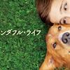 映画『僕のワンダフル・ライフ』:犬好き必見!号泣必至の名作だぞこりゃあ!!