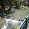 初夏の鴨々川です!(中島公園の西側)