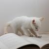 【読書論】自己肯定読書と自己改革読書の違いとは?