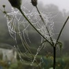 """畑からこんにちは! 1020   """" もの凄い霧の中…  """"   #家庭菜園 #野菜 #霧 #濃霧"""
