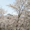 四季を感じて/スマイル歯科 2017/4/11