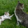 猫が嫌い!!猫好き時代の生きづらさを分かち合うためには