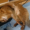 猫の粗相(おもらし)解決におしっこシートを活用してみた