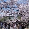 上野恩賜公園で桜を撮って来た。