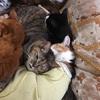 ゴールデンウィークに具合が悪くなると辛いのは猫も同じ。