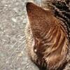 6月28日(木)  猫ナンパされたこと、ありますか?