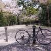 2021/04/05 Mon. 敷き櫻