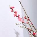 花木と暮らし