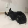 暑くなって黒猫・ミコが床でゴロゴロしだした