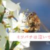 ミツバチを使ってコロナ検査をする必要はあるのか? オランダ・ワーヘニンゲン大学の研究