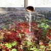 【YouTube 更新】深まりゆく様子の鎌倉紅葉はこのタイミングだけ。