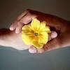 【幸せ結婚生活】尊敬の具体的な伝え方(「サレンダードワイフ」より)