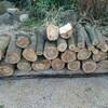 薪ストーブ始生代34 原木を入手する~神社の薪③