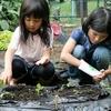 6/6  辰巳の森緑道公園