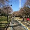 駒沢公園の桜