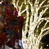 クリスマス前に軽く光らせる表参道のイルミネーションに好景気を感じない夜