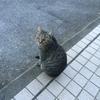 猫と合宿と私