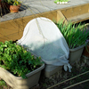 冬のプランター野菜