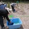 バケツとひしゃくでブルーベリーの水遣りと植替え ラベンダー満開