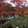 五色沼の伝説『ハートの鯉』を見つけに。紅葉も美しい!