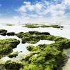 12春愁(しゅんしゅう)や藻の彩残し潮退けり(春)道春