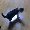 スイッチ不明おネコさま。