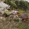 秀吉も花見を行った醍醐寺を散策。(Kyoto, Daigoji)