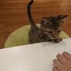 ~魅力ある猫共生住宅~猫に学ぶ①