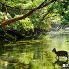 夢リスト113・鹿児島の屋久島へいく