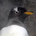 ペンギンの話