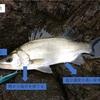 海水魚と淡水魚の呼吸の違い〜生息域の塩分濃度から生理学を簡単解説
