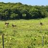 鹿の群に遭遇 根室半島にて