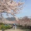 日本一の酒どころで花見を楽しむ隠しアイテム!