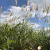 木柵 遊びのスポット:福德坑環保復育公園