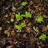 春は眠いといいますが……身体も季節の変化に順応していこうとしているんですね。「旬」感覚を取り戻そう!