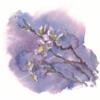 桜の枝 (再び)