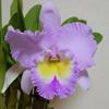 原稿執筆中に開花したお花たち