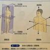 身体の使い方seriesその33『身体の軸を面で考える』面を経絡的に解説。クライマー・武術家・一般の方々にも身体の使い方が変わり三次元的な考察です!!