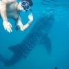 世界で唯一!?ジンベイザメと一緒に泳げる観光スポット「オスロブ」