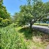 浮島沼釣り場公園 菖蒲池(静岡県富士)